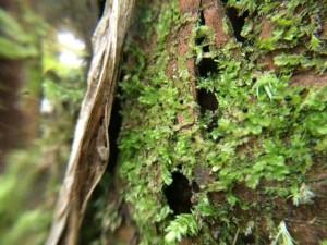 黒丸の朔がつく謎の苔