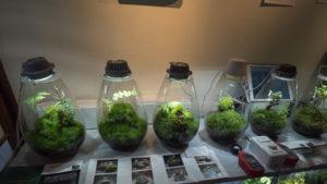 鎌倉苔展では関西からMosslight-LEDがやってきました