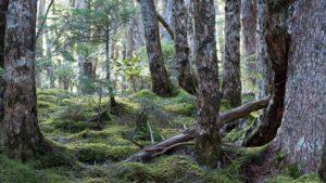 肉眼でも苔の林がきれいに見えます
