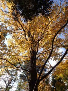 京都は紅葉がはじまっています