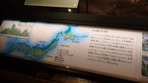 日本固有種ハイヒバゴケの解説