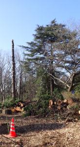 切り拓かれた雑木林